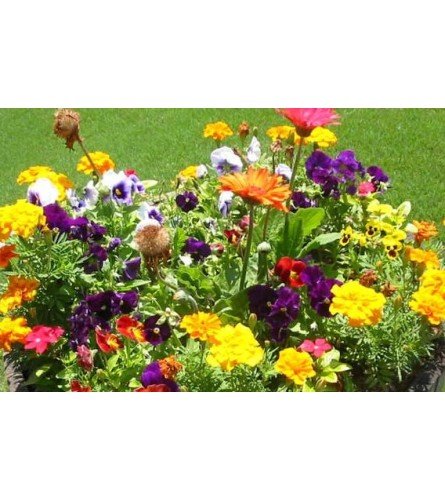 PATIO PLANTER OF OUTSIDE ASSORTED ANNUALS