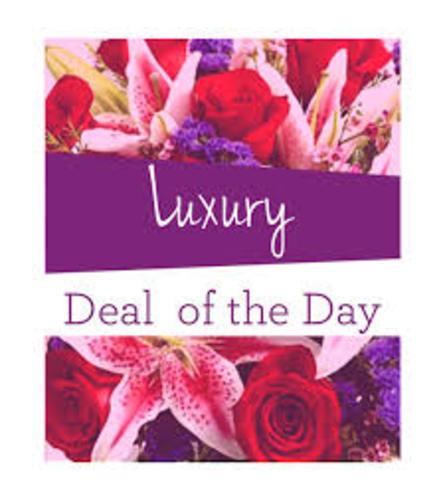 Luxury Designers Choice