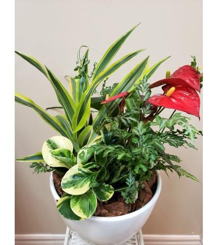 Modest Anthirum Tropical Planter