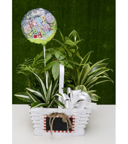 Fresh Country Garden Basket with 'Happy Birthday' Balloon