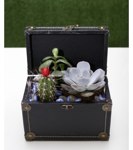 Succulent Dish Garden in a Box