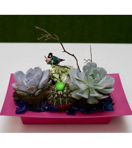 Succulent Paradise Dish Garden