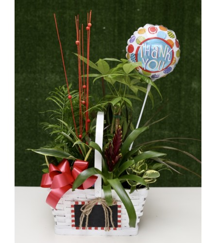 Charming Dish Garden with Thank You Balloon