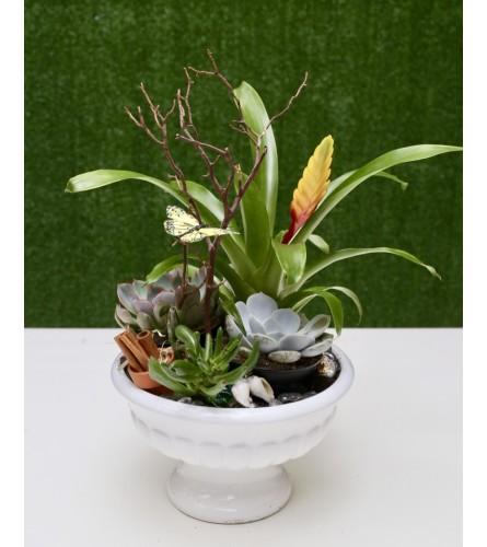Exquisite Dish Garden with Succulent