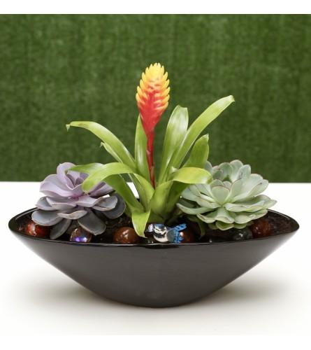 Stunning Succulent Garden in Ceramic Pot