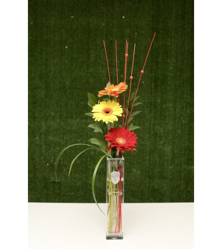Gerbera Daisys in a Premium Polish Vase