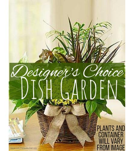 Dish Garden Florist Design