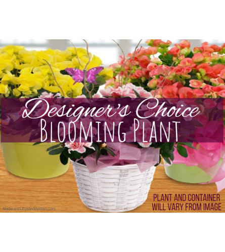 Blooming Plant Florist Design