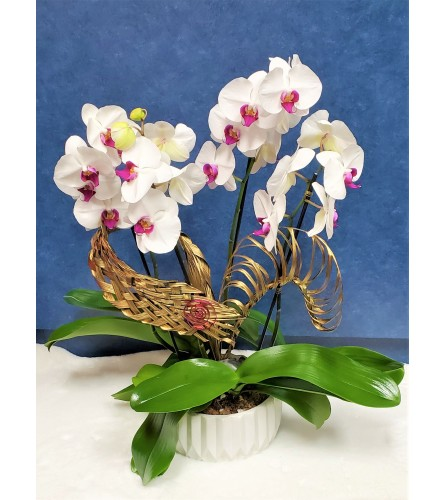 Orchid Of Love