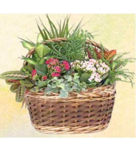 Aukland Planter Basket Large