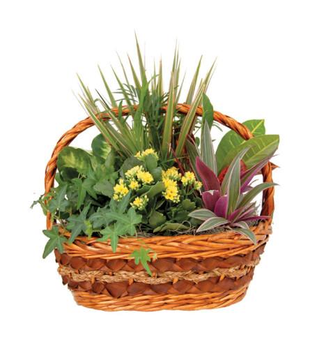 Carrie Indoor Garden Basket (Large)