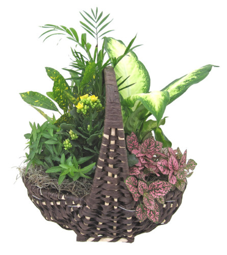 Empire Indoor Garden Basket