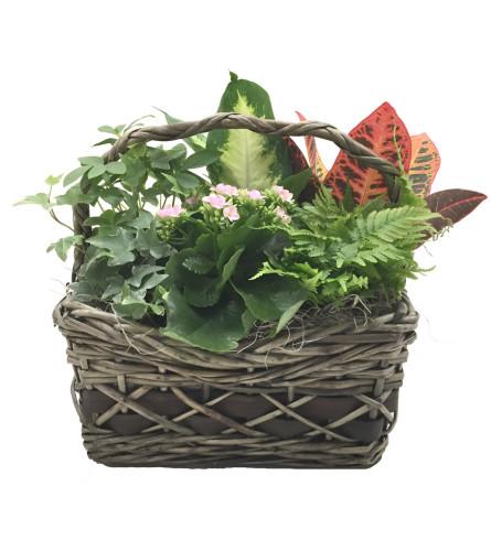 Griswold Indoor Garden Basket (Medium)