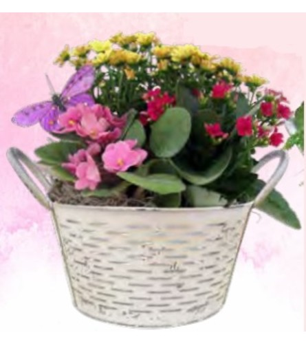 Mixed Flowering Tin Olive Planter