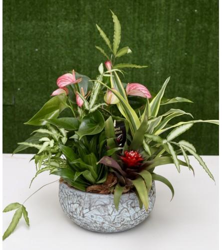 Garden of Paradise in a Ceramic Pot