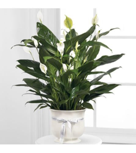 Ceramic Comfort Planter