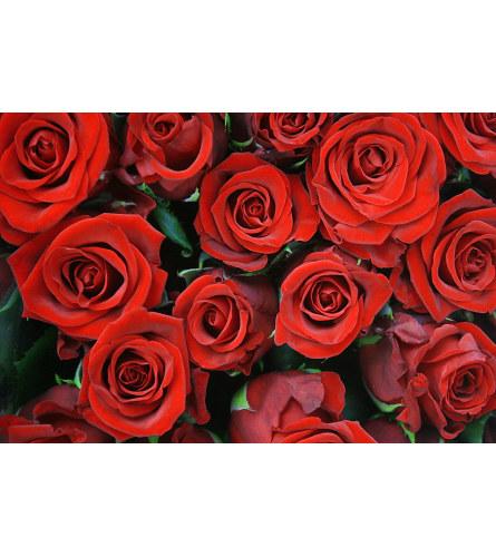 DELUXE RED ROSES (2 DOZEN & 3 DOZEN)