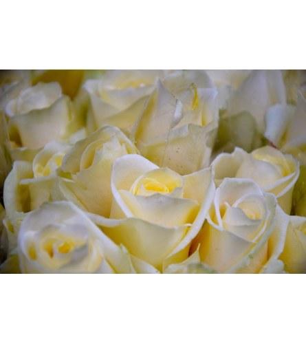 DELUXE WHITE ROSES (2 DOZ & 3 DOZ)