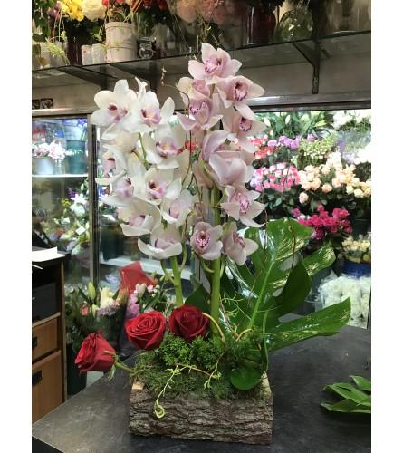 Elegant Cymbidium Orchid