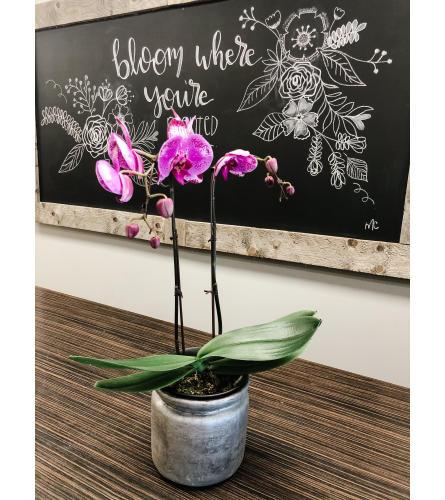 Simplicity Planter