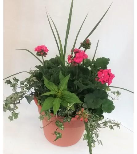 Small Geranium Patio Planter