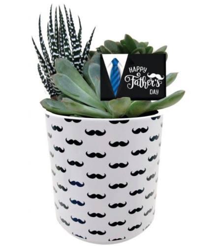 Moustache Succulent Planter