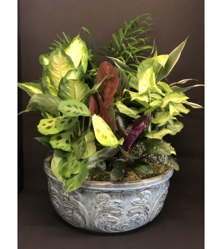 Designer Dish Garden in Ceramic Planter XL & XXL