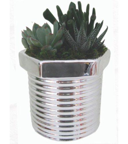 Phillip's Succulent Planter