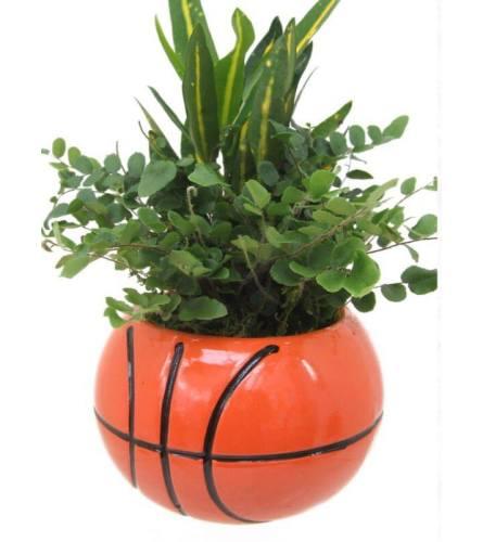 Basketball Green Plant Garden