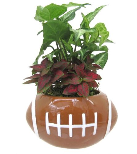 Football Green Dish Garden
