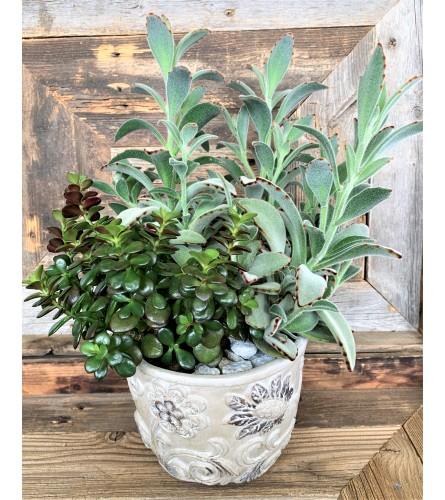Lush Elegant Succulent