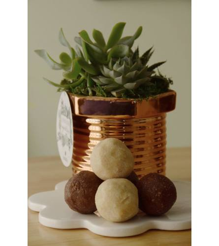 Cactus Planter with Protein Bites