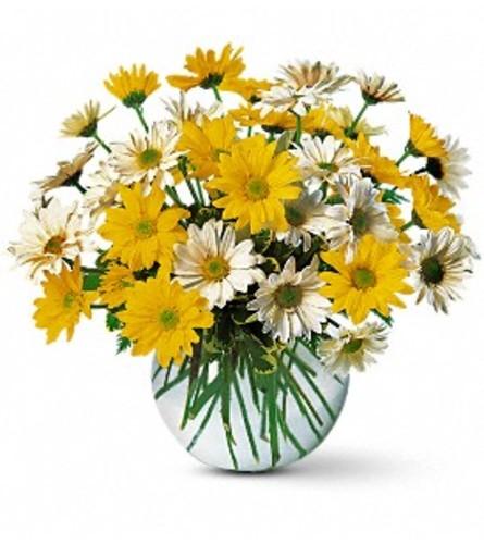 Dashing Daisies Vase Arrangement