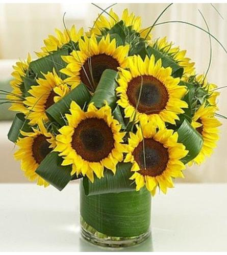 Sunflowers Splendors Glamour