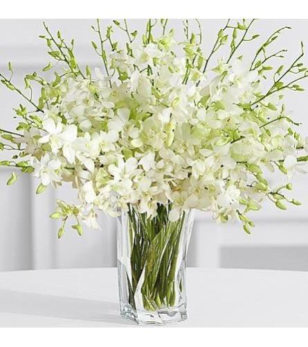White Dendrobium Orchids  Glamour