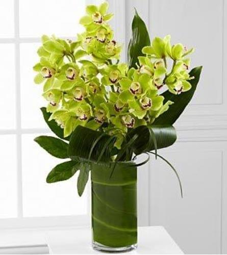 Green Cymbidium Orchid Glamour