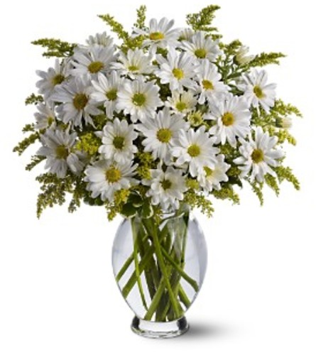 Teleflora's Daisy Days Vase Arrangement