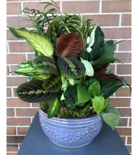 Ceramic Greenery Dish Garden