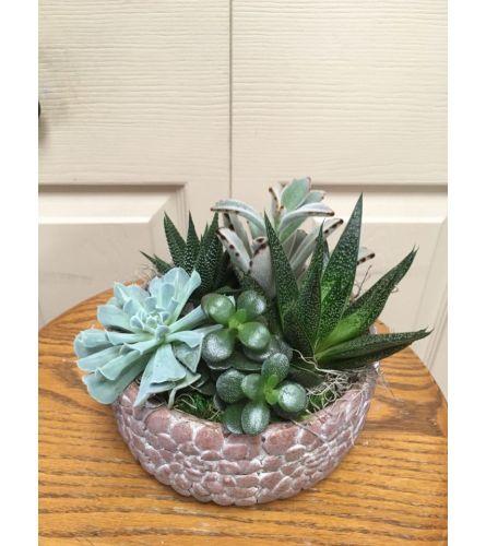 Round Succulent