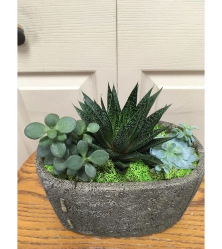 Stitch Succulent
