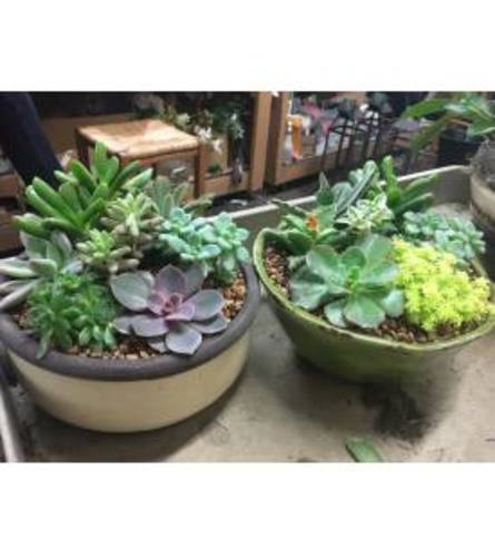 Zen Succulent Gardens