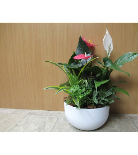 Large  Anthurium mixed Planter