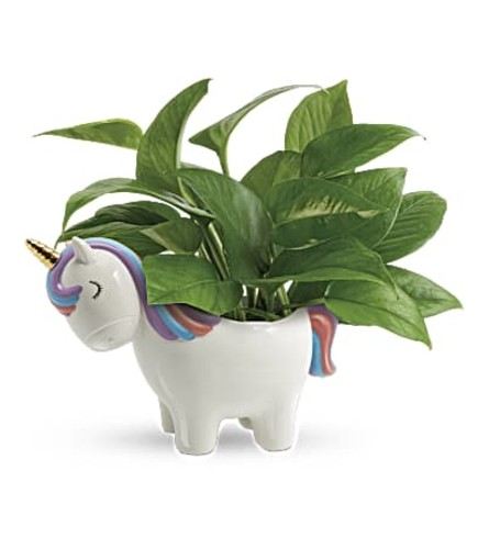 The Peaceful Unicorn Pothos Plant