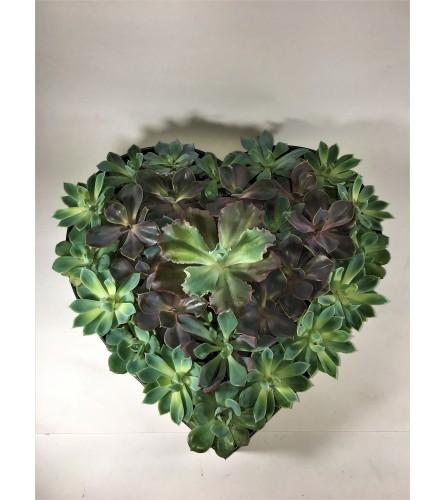 Succulent Love heart planter