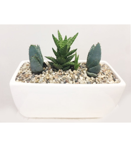 Aloe Collection 8""