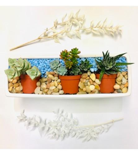 Succulent Garden Art - Premium