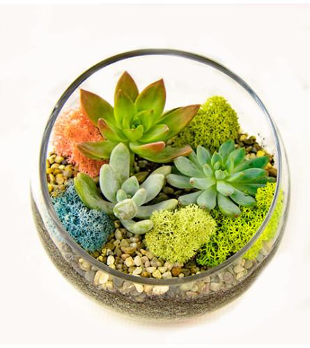 The Heart Company- Slant Glass Succulents