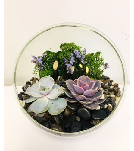 The Heart Company- Glass Stand Succulents