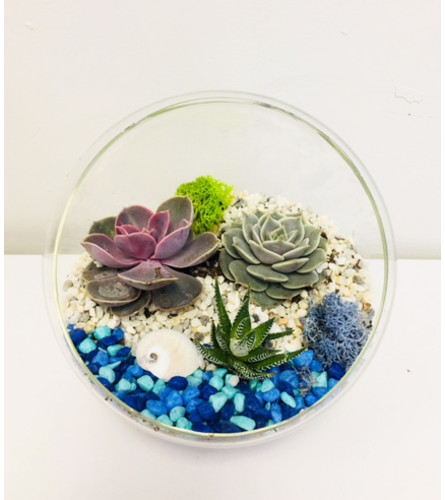 The Heart Company- Glass Stand Succulents - Beach Theme