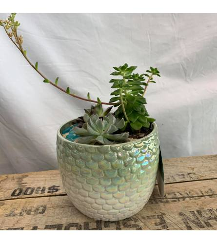 Mermaid Succulent planter Garden